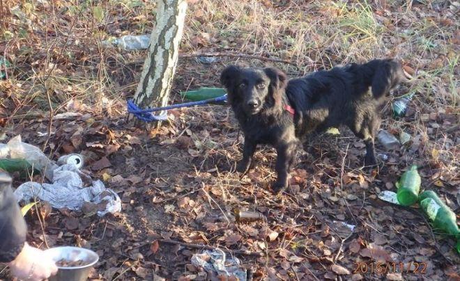 Znęcał się nad psem i przywiązał je w lesie do jednego z drzew.