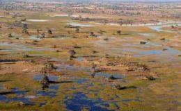 Podróż do Okawango
