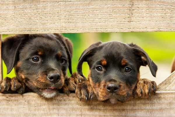 Akcesoria dla psów – na co warto się zdecydować?