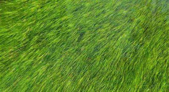 8 rzeczy o zakładaniu trawnika z rolki, o których mogłeś nie wiedzieć