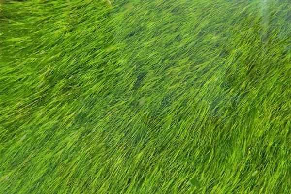 ABC koszenia trawnika