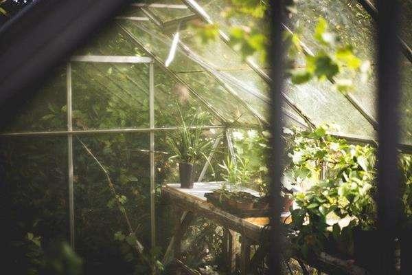 Kolorowe rośliny do ogrodu Dębno